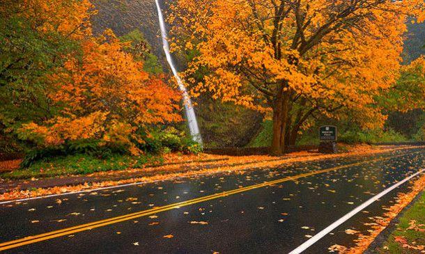 Oregon Fall Foliage Report
