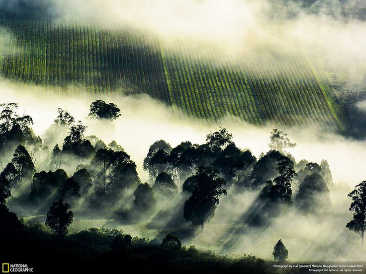 21 Of The Best Nature Photo Entries To The 2014 National Geographic Photo Contest: Location: Mansfield, Victoria, Australia