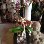 Orchids - Nisie's Enchanted Florist - Wedding Florist in Orange County California
