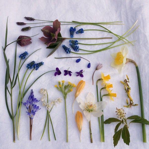 blomsterochbakverk.se - Moodboard april