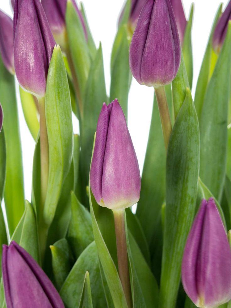 die besten 25 lilafarbene hochzeitsblumen ideen nur auf pinterest lila brautstr u e lila. Black Bedroom Furniture Sets. Home Design Ideas