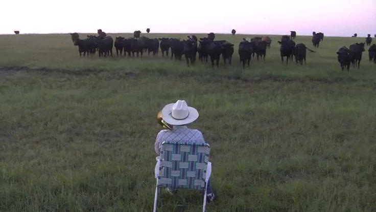 Un granjero llama a sus vacas tocando el trombón - Voxpopulix.com