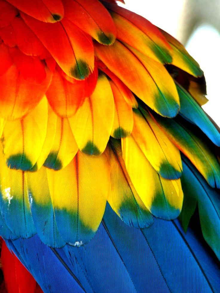 40 best Feathers images on Pinterest | Feathers, Natural ...