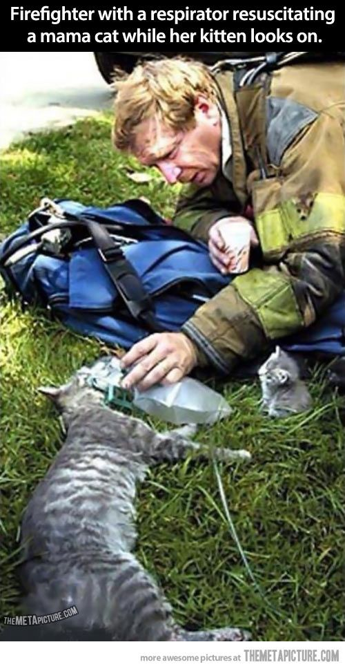 Fire fighter with a respirator resuscitating a mama cat while her kitten
