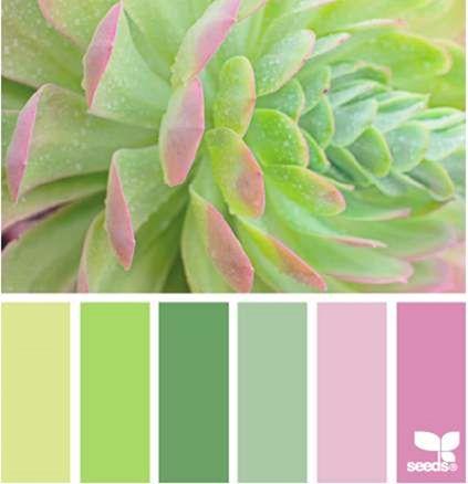 Design Seeds® for all who ❤ color succulent spring - Google Chrome_2014-03-31_10-12-49