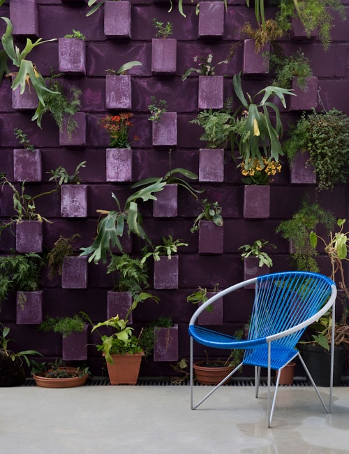 Love this painted cinder block wall with staghorn ferns