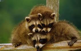 Resultado de imagen para momentos mas tiernos en la vida animal