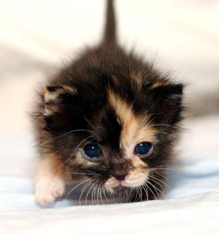 Все милые картинки с животными до слез