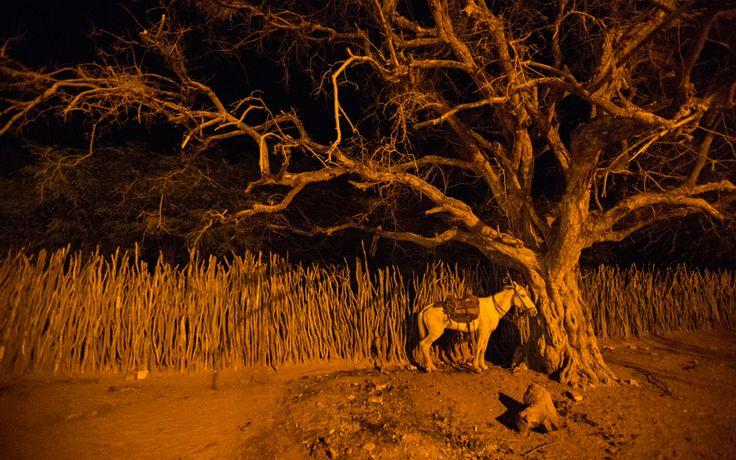 A noite em Sertão também é tema da jovem | #AmoresRoubados | Fotos da Antônia | TV Globo