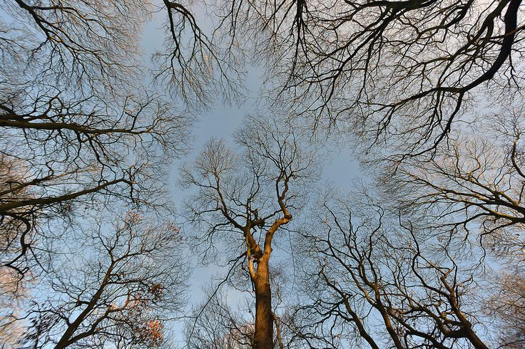 DESPITE STRAIGHT LINES posted a photo:  Photograph taken at an altitude of Twenty five metres at 10:28am on Monday January 2nd 2017 off Abbey Road B213 and New Road in the grounds of Abbey Wood open space in Bexleyheath, Kent, England.  .  .  Nikon D7200 10mm 1/500s f/4.0 iso100 RAW (14 bit Lossless compressed Image size 6000 x 4000). Colour space sRGB. Handheld. AF-C focus 51 point with 3-D tracking. Manual exposure. Matrix metering. Auto white balance. Auto Active D-lighting. Nikon…