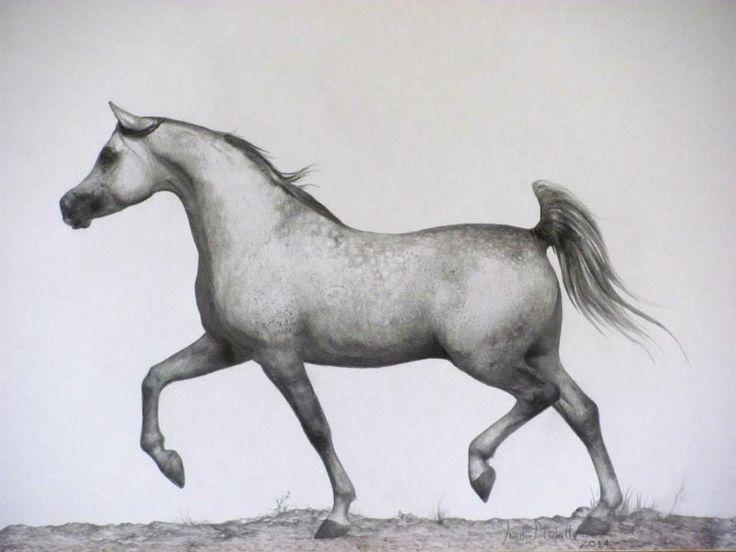 THE ARABIAN by Landi-Michelle van den Berg. Graphite pencil & black and grey watercolour pencils.