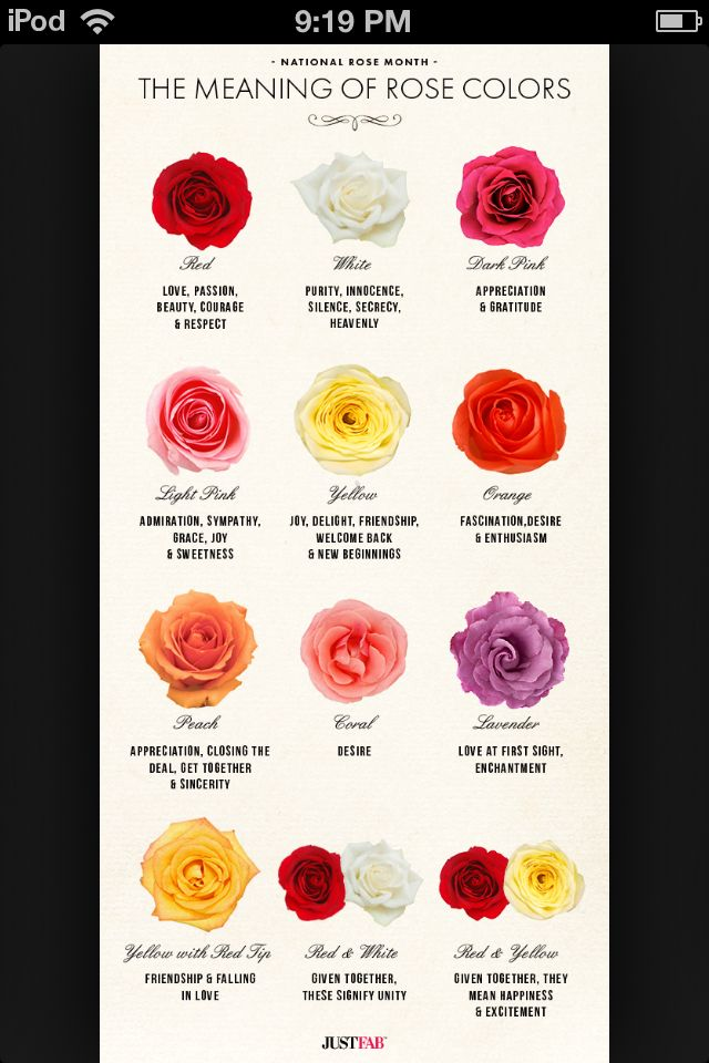 Meaning Of Each Color Rose Beauty Pinterest