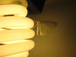 Le luci a LED attirano gli insetti? | Pannelli a Led
