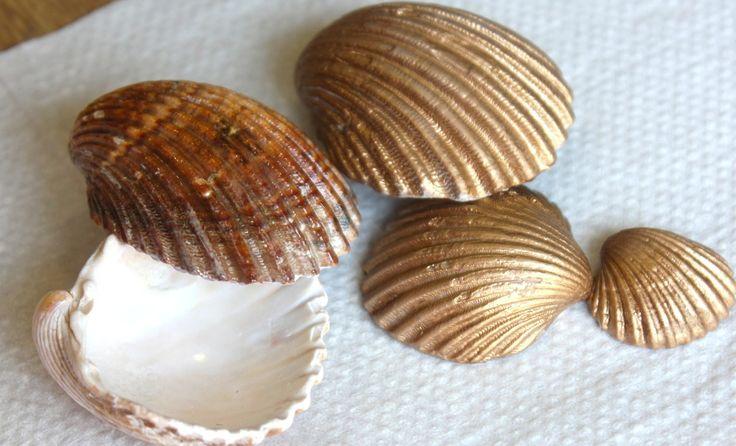 Cómo se limpian las conchas de la playa