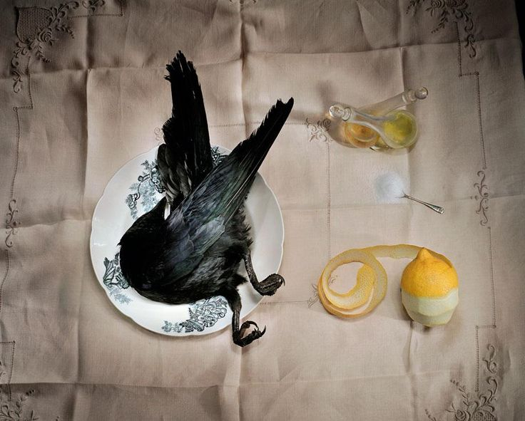 "'Crow with salt' from Marian Drew's ""Still Life/Australiana"" series"