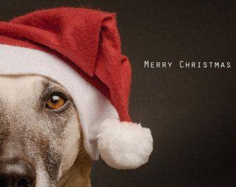 Sie erhalten ein Set 15 Hund Grußkarten mit einem Fotodruck auf hochwertigem Papier (beschichtet)  Von Elke Vogelsang (Wieselblitz Fotografie,