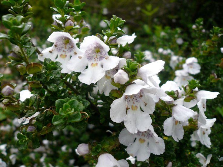 95 besten Blüten und Blätter Bilder auf Pinterest | Gärtnern ...