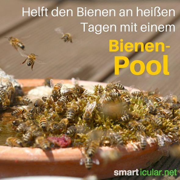 Trend  Wege wie jeder den Bienen helfen kann Petitionen sind nicht genug