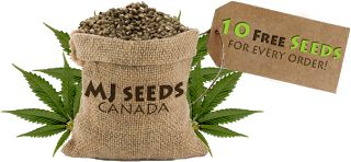 There are a lot of companies which sell cheap marijuana seeds and they will even offer free seeds with your order of high quality premium weed seeds. Buy marijuana seeds from them and you will surely receive premium, high quality, yet cheap high germinating cannabis seeds. The shipping time and fees may differ depending on where you are located at. There are times when these online seed banks offer free shipping to their products.