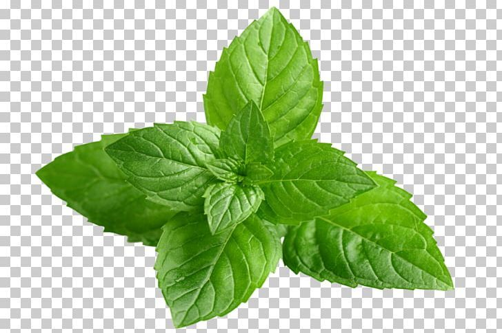 Peppermint Mentha Spicata Extract Herb Menthol Png Basil Extract Food Herb Herbalism Mint Leaves Fresh Mint Leaves Herbs