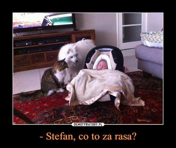 - Stefan, co to za rasa? –