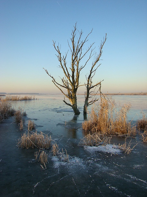 Lonely tree in winter, the Oostvaardersplassen, The Netherlands - a nature 56km reserve that is the focus of a rewilding initiative managed by the State Forestry Service..   via pinterest
