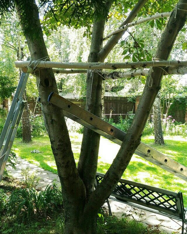 Treehouse. Processing. Only tree & ropes.