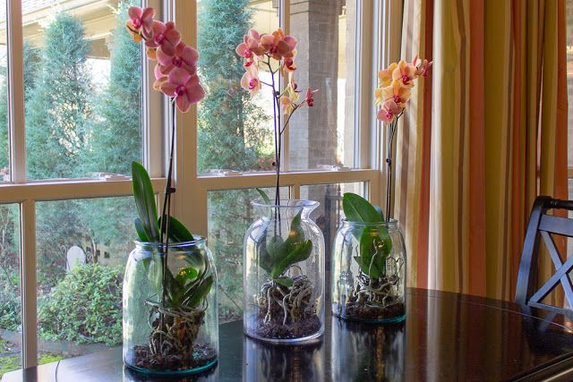 Orchids Under Glass | Plant in glass, Orchids, Indoor orchids