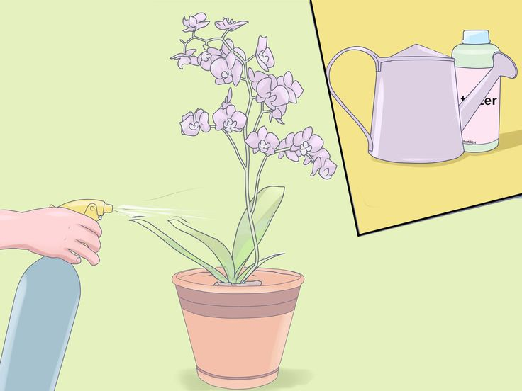 Caring for mini orchids is very similar to caring for standard orchid varieties. Like their standard-sized counterparts, mini orchids thrive in warm, humid conditions with semi-dry roots. Mini orchids tend to be a little more sensitive,...