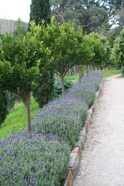 Upright bricks surrounded by lavender