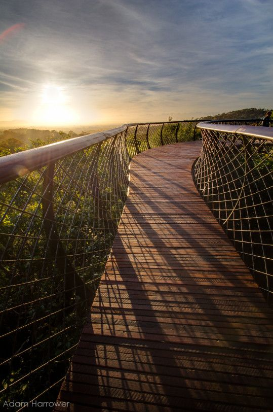 In pictures: an impressive elevated walkway in South Africa © Adam Harrower
