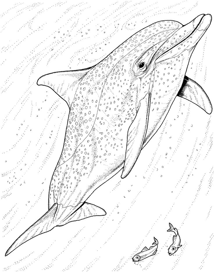 Bottlenose dolphin coloring pages free dolphin coloring for Bottlenose dolphin coloring page