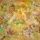 David 2005, 2.00 x 1.50 cm.