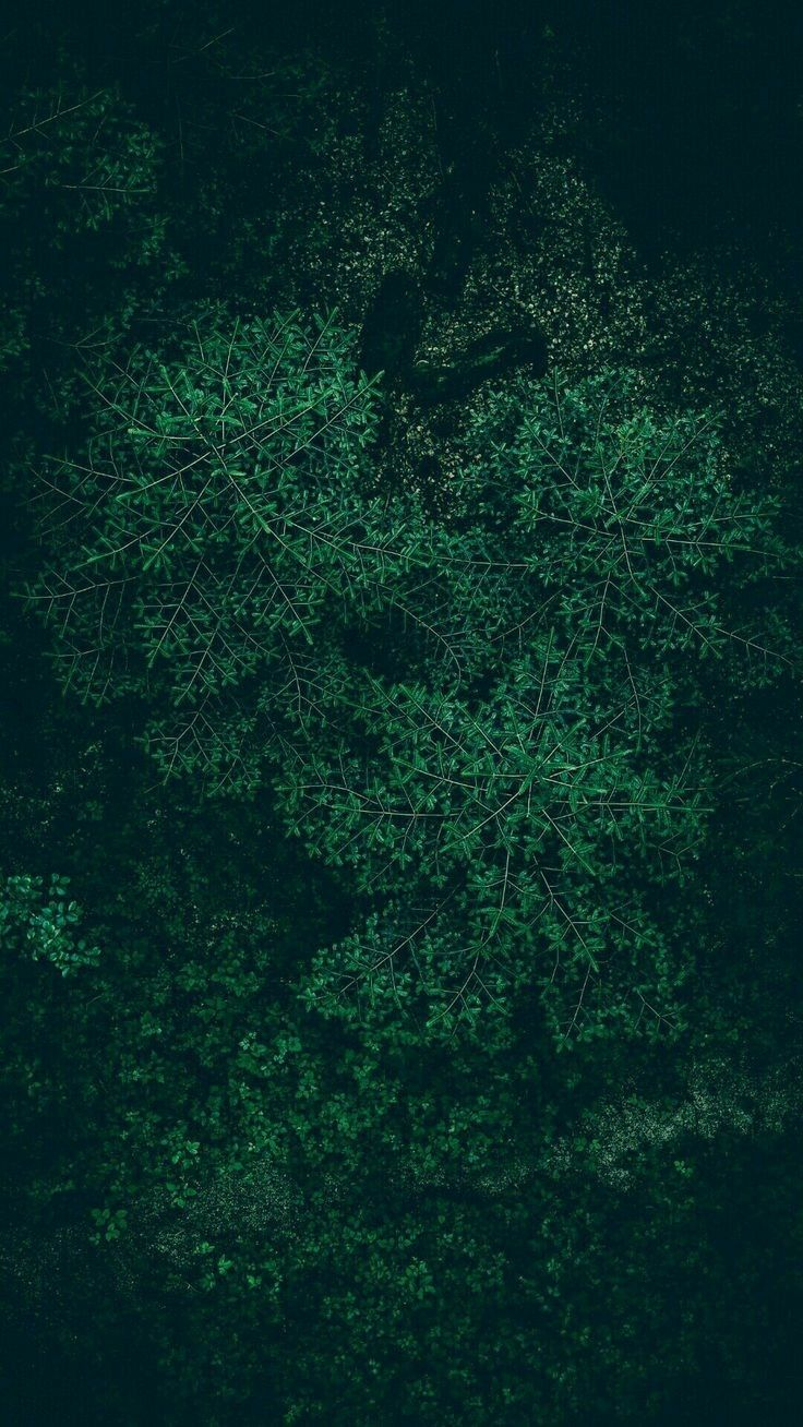 Solid Dark Green Iphone Wallpaper