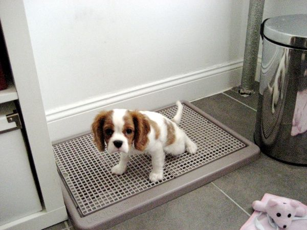 Indoor Potty Solution Ideas Dog, Indoor Dog Bathroom Solutions