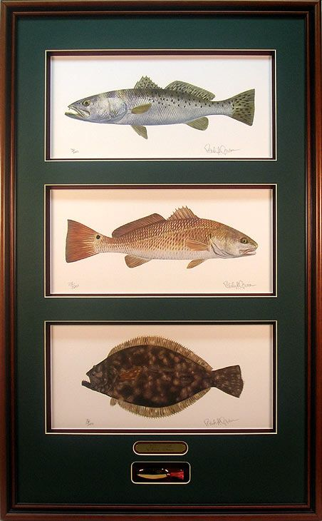 21 best images about speckled trout fish paintings on for Texas saltwater fish
