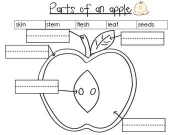 Apple Crazy! Using Your 5 Senses In An Apple Taste Test