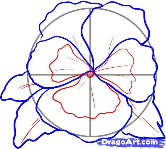 pansy flower drawing - photo #24