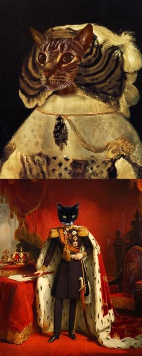 Very fancy cats: Fancy Cat