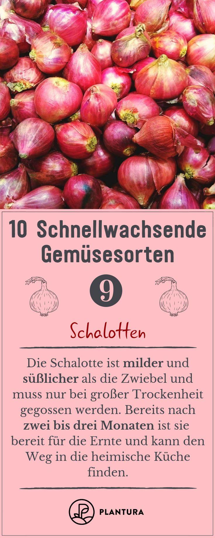 10 schnellwachsende Gemüsesorten – Lela Trültzsch-Klink