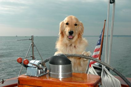 Boats are great way to spend the hot summer days. Here's our guide to boat safety for you & your pooch.