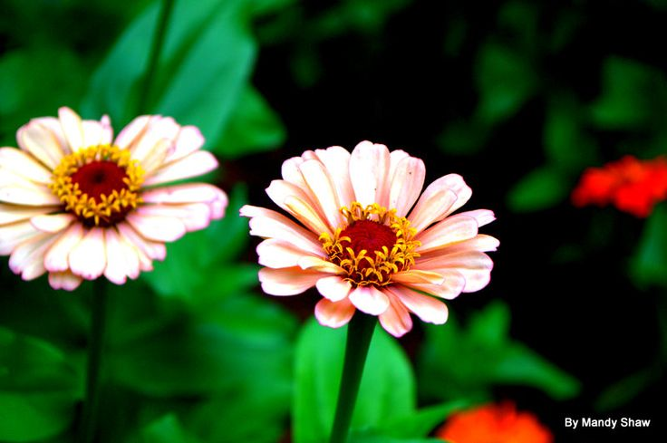 Flowers Shaw Dc