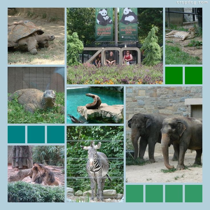 memorial day zoo dc