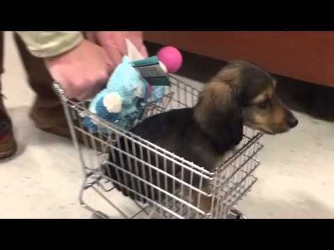 Going Shopping With A Small Puppeh?