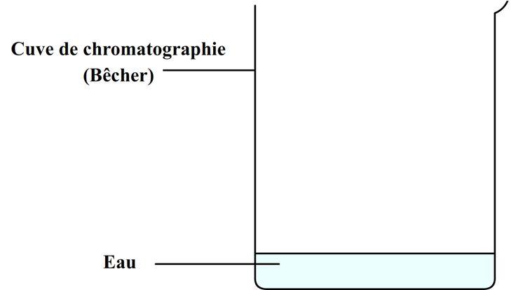Cuve de chromatographie