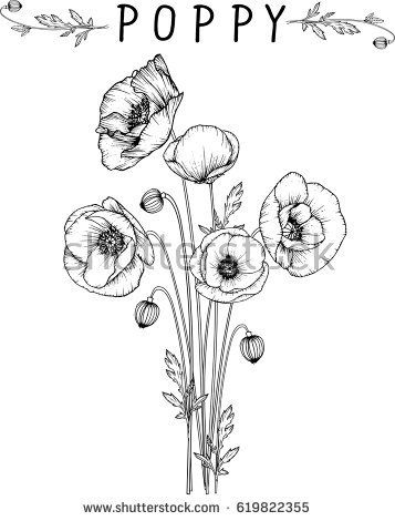 flowers drawing poppy flower vector, illustration and line art – Becky.😃