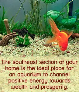 Feng Shui tip on aquarium placement in your house