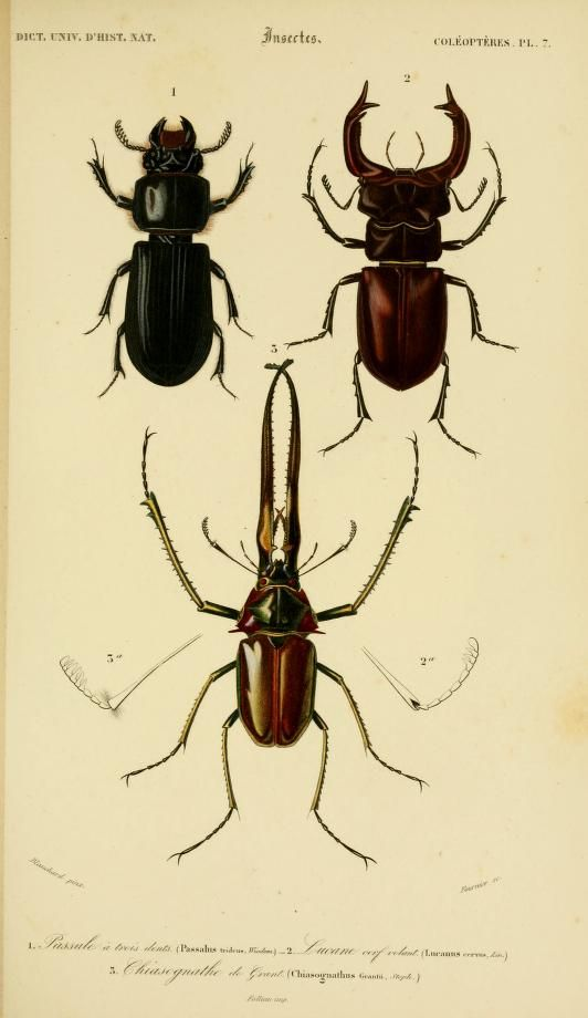 v. 2 1849 - Atlas (Zoologie - Reptiles, Poissons & Insectes) - Dictionnaire universel d'histoire naturelle : - Biodiversity Heritage Library