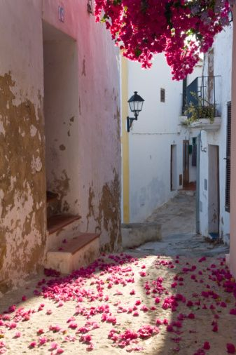 Bougenvillia in narrow street, Old town, Eivissa or Ibiza Town, Ibiza, Balearic Islands, Spain
