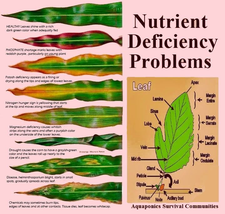 What Does the Leaf Says About Nutrient Deficiency Problem